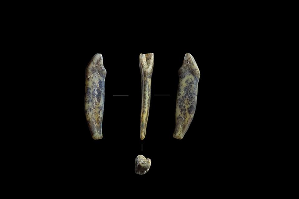 Археологи откопали на Алтае зубы неандертальцев