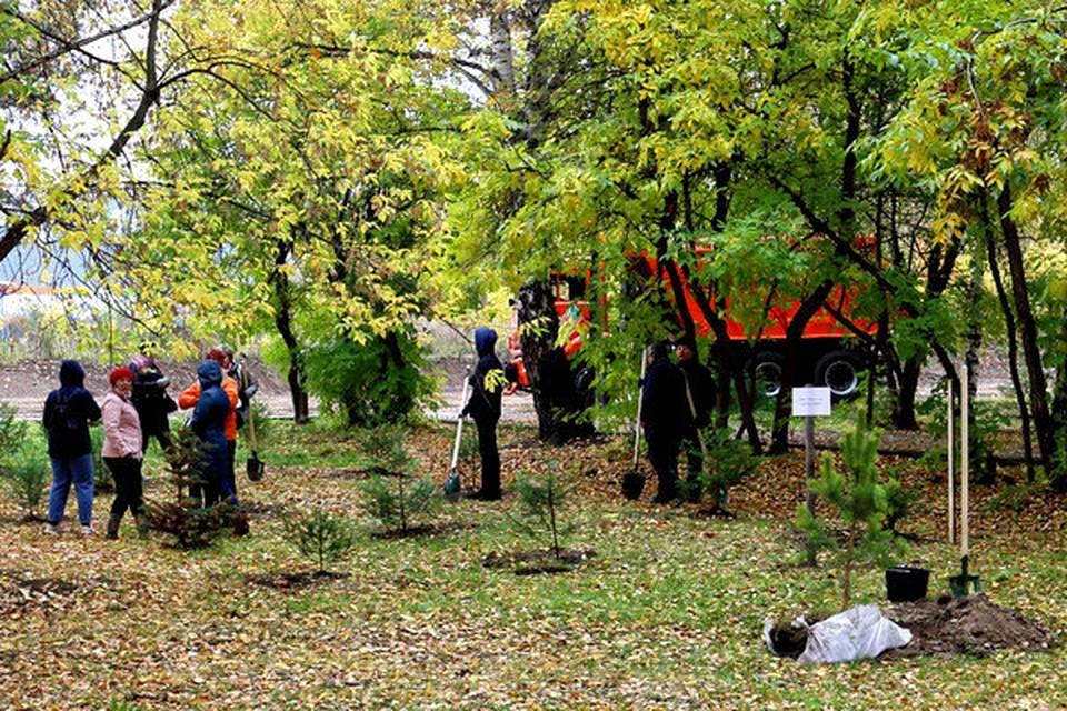 6 тысяч саженцев деревьев и кустов за один день прибавилось на улицах Томска