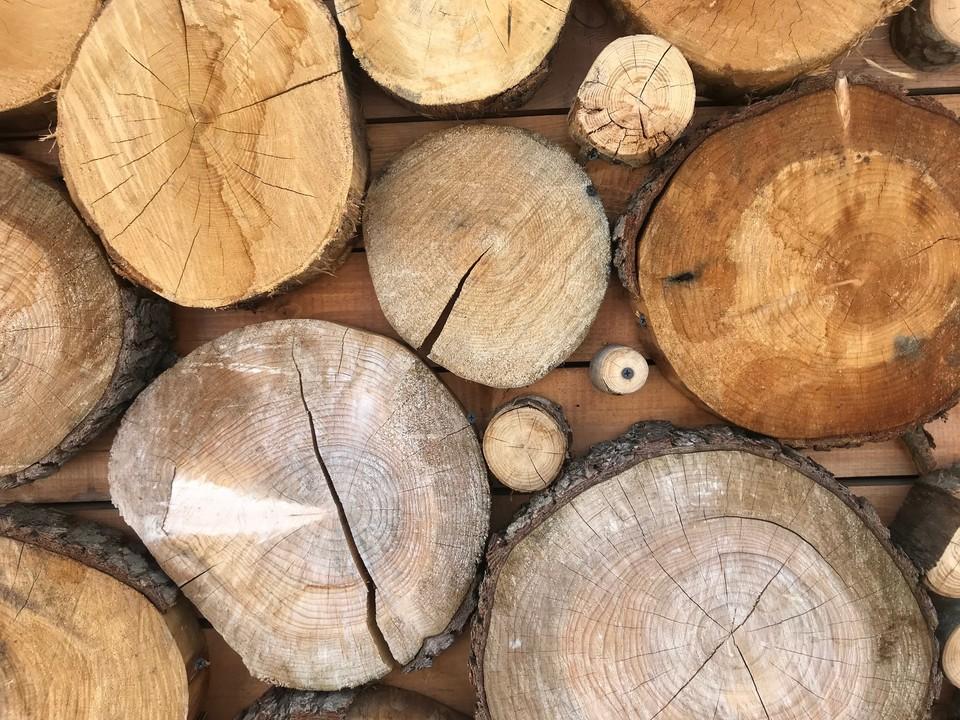 На Кубани пятнадцать редких дубов пустили на банные веники.