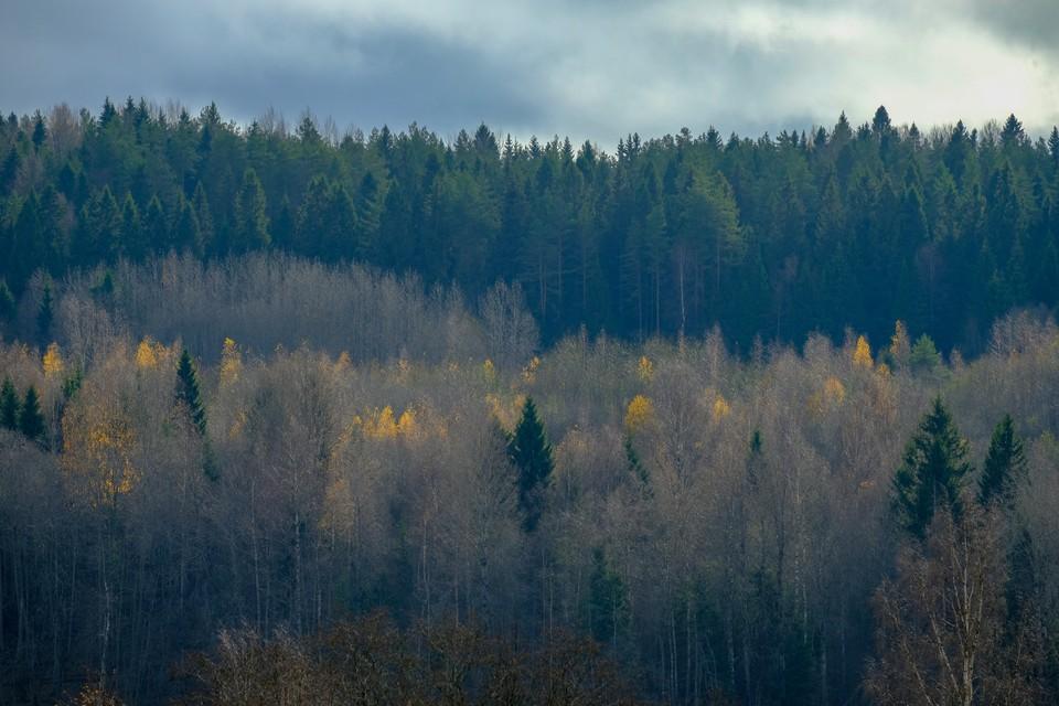 Туман опустится 30 сентября на Ленобласть