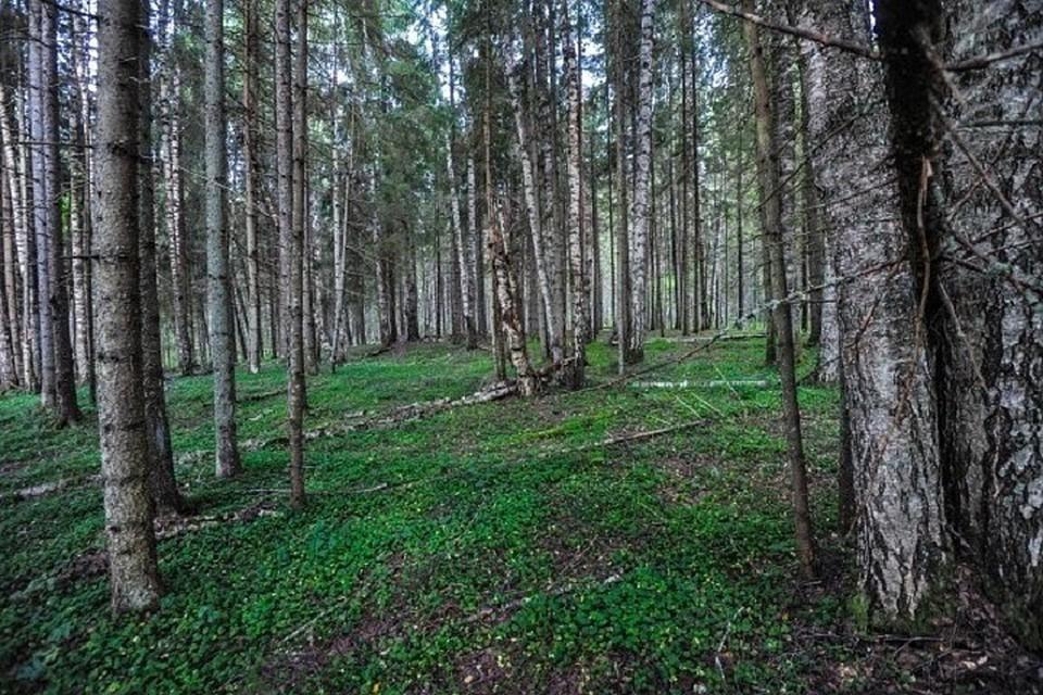 Эксперты рассказали, кто и зачем создает первые частные леса России