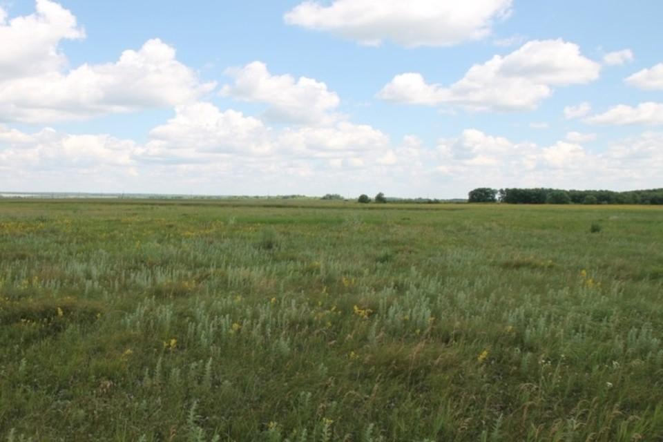Фото предоставлено минлесхозом Пензенской области