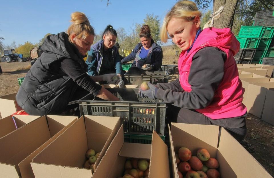 Суперинтенсивный яблоневый сад в селе Кузнецово-Михайловка Тельмановского района был заложен в апреле 2017 года