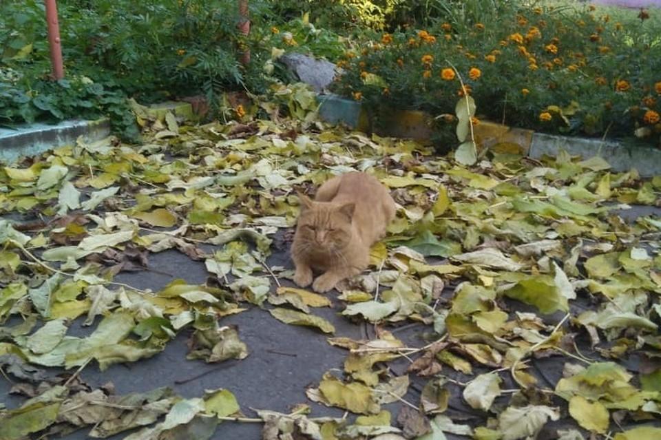 В такую погоду хорошо гулять по парку, где много опавшей листвы