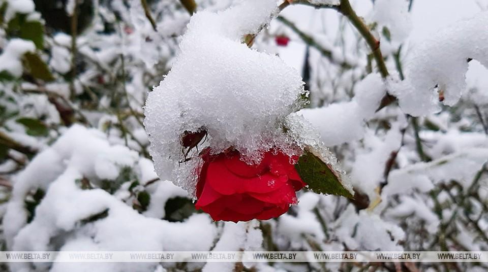 Ночью по Беларуси были первые осенние заморозки: от -1℃ до +5℃. Днем воздух прогреется до +4℃… +10℃. Фото: belta.by
