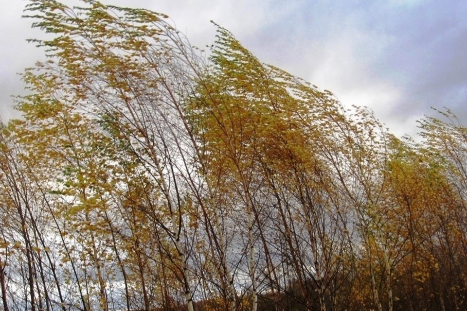 Ветер усилится до 8-13 м/с, местами порывы могут достигать до 18 м/с, по югу - до 23 м/с.