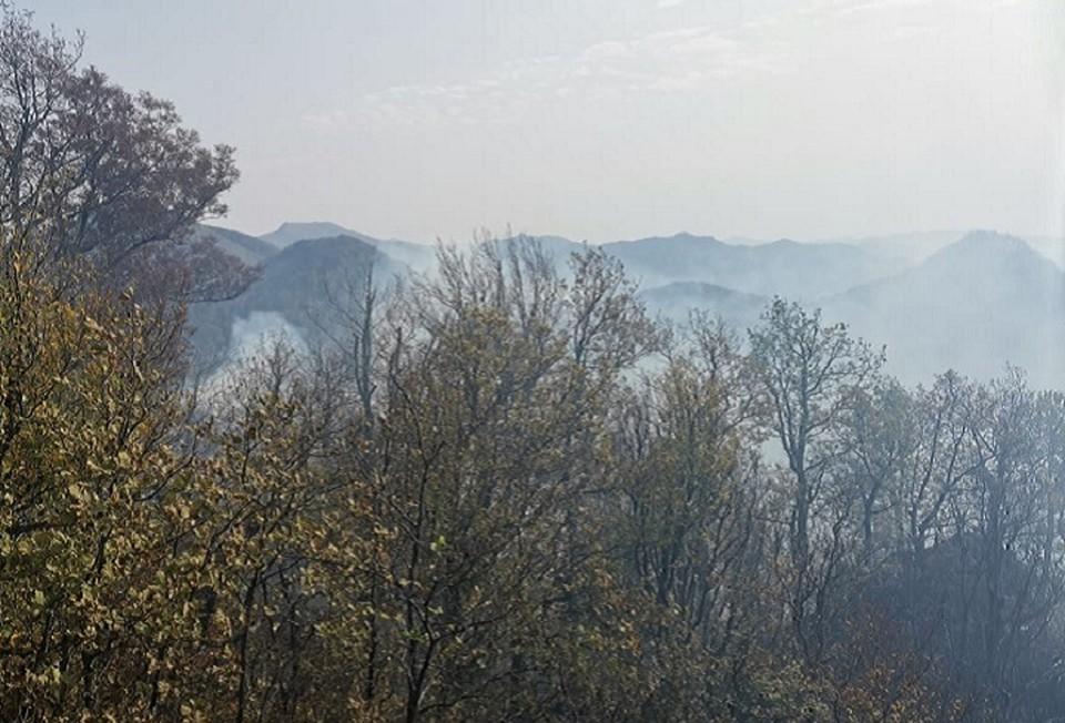 Видео лесного пожара в Туапсинском районе 28 октября 2020: площадь, охваченная огнем, увеличилась до 11 гектаров