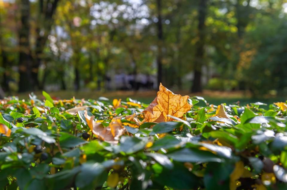 Ноябрь в Петербурге начнется с теплой погоды.