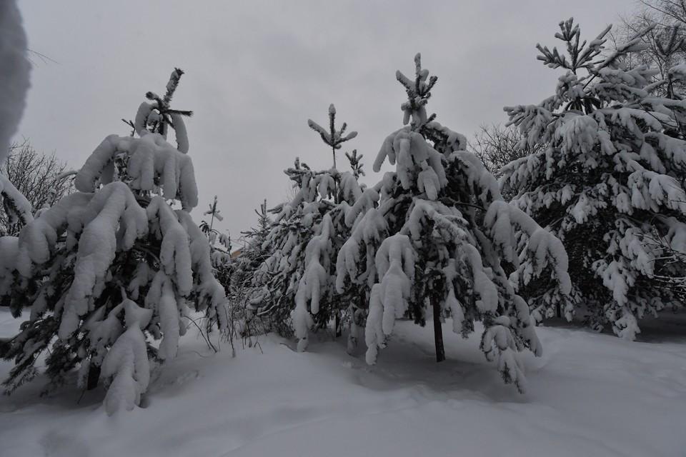Вильфанд назвал срок появления снега в России