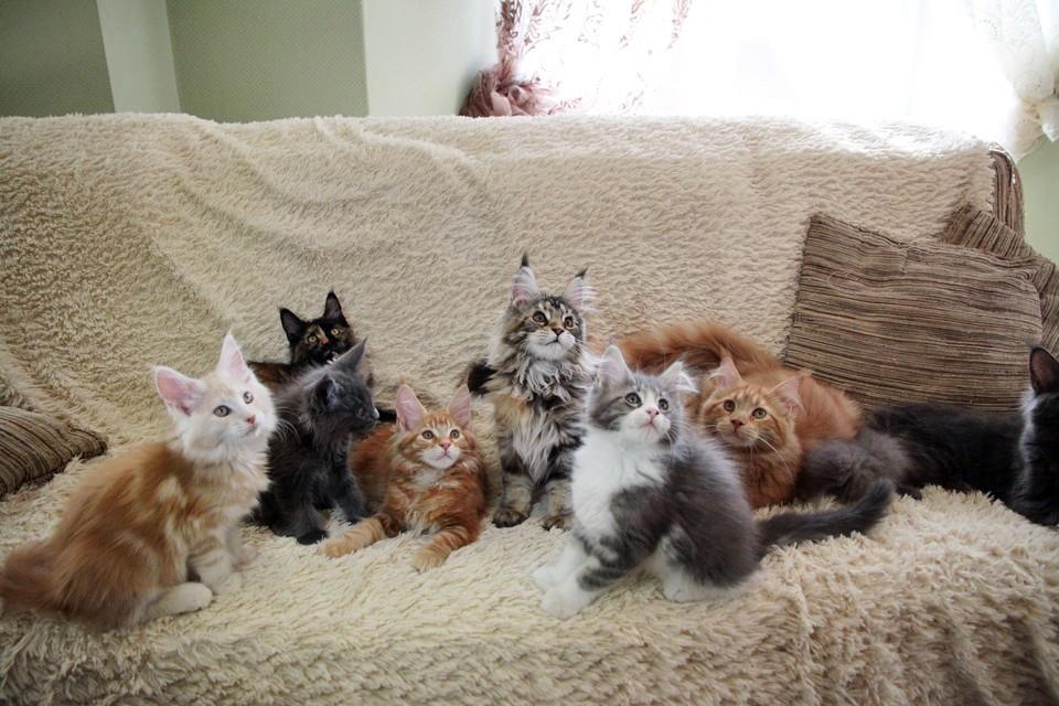 Зоолог рассказала о главных страхах домашних кошек