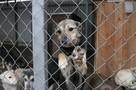 В Мурманской области с 2021 года изменятся правила отлова бездомных животных