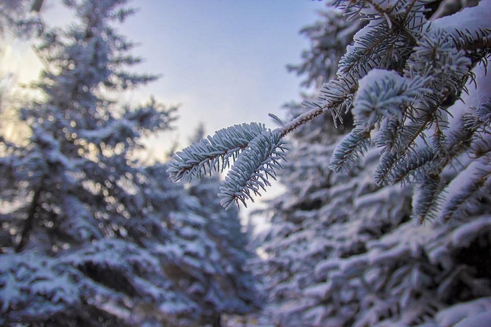 Сегодня осадков не ожидается, днем будет прохладно.