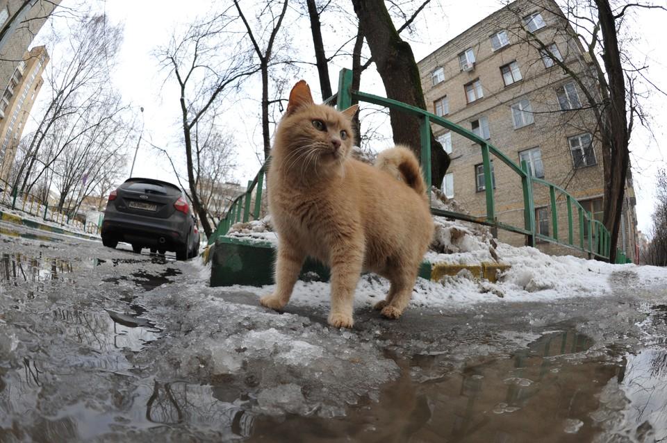 Синоптики сообщили об аномальном потеплении в нескольких регионах России