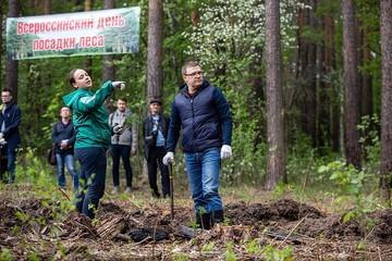 Количество посадочного материала для компенсации вырубленного леса увеличится