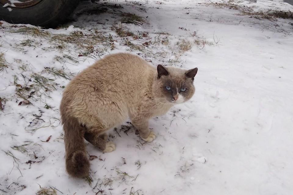 «Обнял меня лапками и замер»: пронзительная история пропавшего кота, который вернулся домой спустя два года