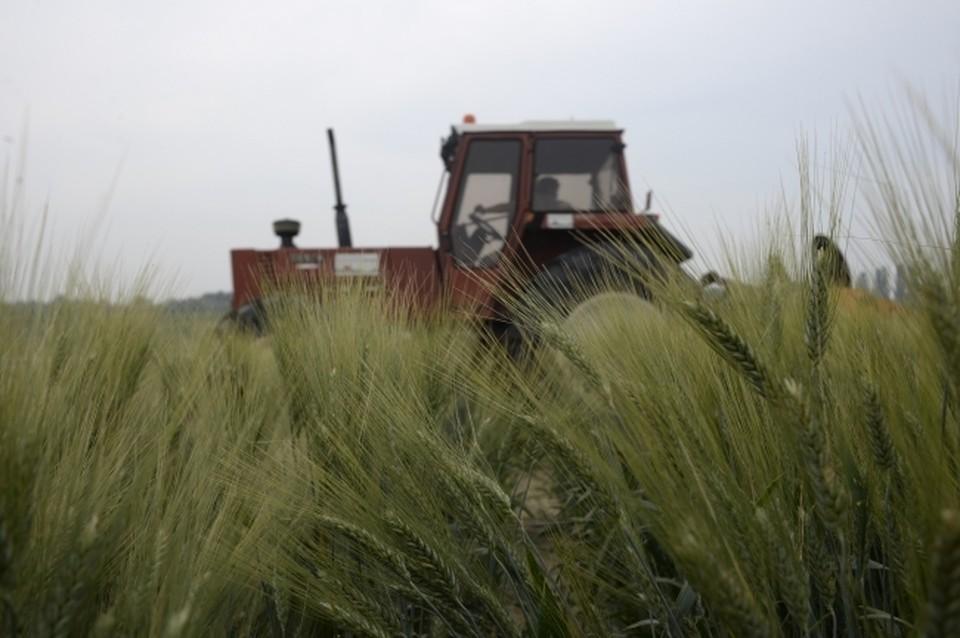В Хабаровском крае собрали зерновых и овощей больше, чем в прошлом году