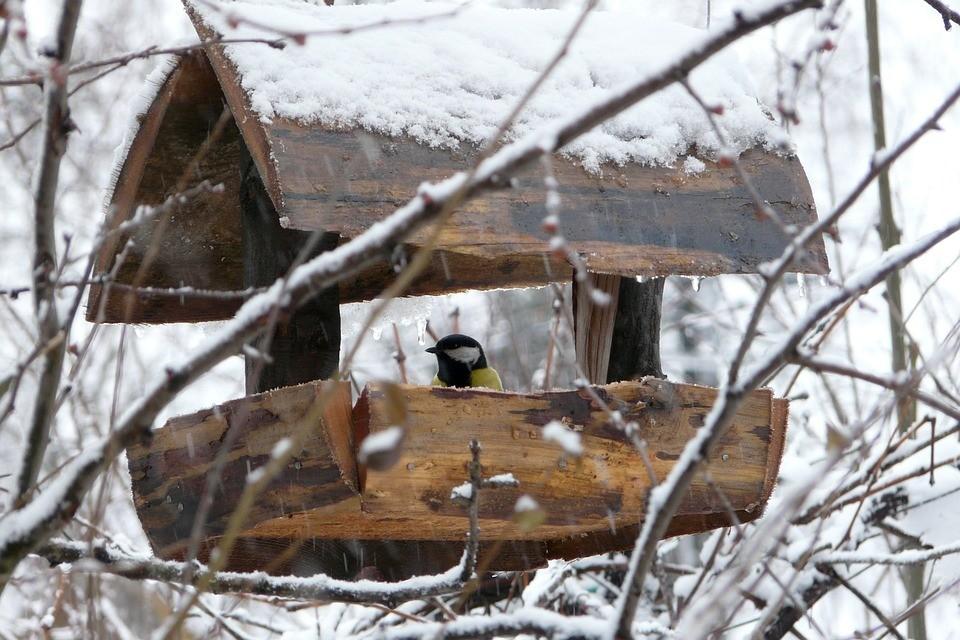В Югре ожидается пасмурная погода, пройдет небольшой снег. Фото - pixabay.com.