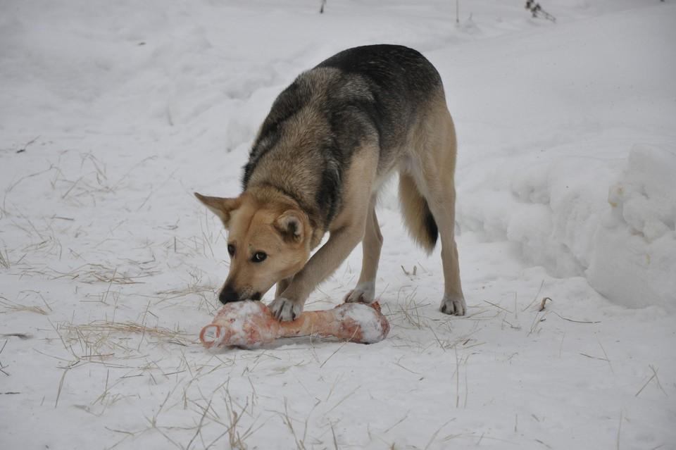 Власти объяснили, откуда взялись трупы убитых и развешанных по деревьям собак