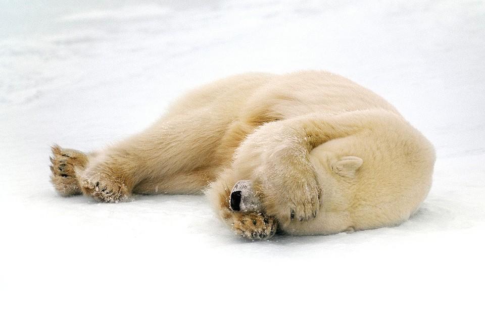 Ученые подготовили тревожный доклад о последствиях процесса глобального потепления.