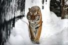 Дикий зверь разодрал охотника в Хабаровском крае