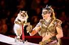 «Мы завели традицию брать с гастролей по бездомному котенку»: сибирячка делает из животных-потеряшек цирковых звезд