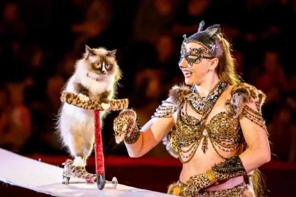 Кошки-артисты собраны из разных сибирских городов, все — уличные. Фото: Предоставлено Ольгой Воложаниной