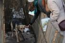 Владимирцы кормят приютских собак и читают им стихи