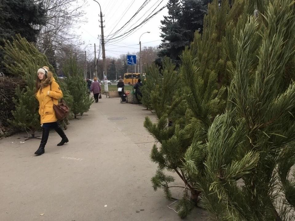 Стало известно, где в Симферополе принимают елки на переработку.