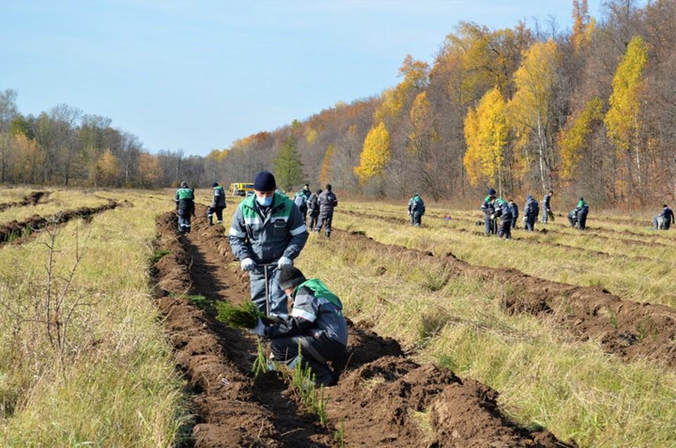 Общая площадь «рукотворного» леса составила более 60 гектаров
