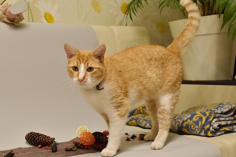 Оказалось, что и у хозяйки, и у кота вирусы практически идентичны