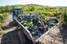 Крымские виноградники защитили от застройки
