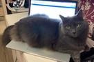 «Не знаю, как он выжил»: Петербурженке спустя пять месяцев вернули кота, который сбежал из багажного отделения самолета в аэропорту Ярославля