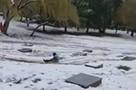 Полиция в Сочи ищет несовершеннолетних, устроивших катание на санках на воинском мемориале