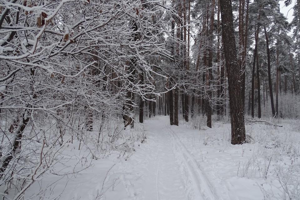 К выходным в Липецке потеплеет до 0 градусов