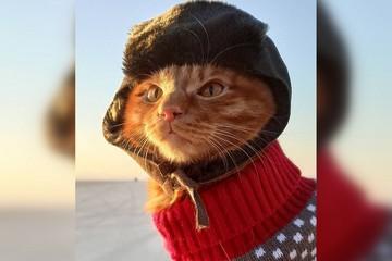 Шапка-ушанка и крошечный свитер. Рыжий кот Симба из Приморья в образе рыбака разбивает сердца