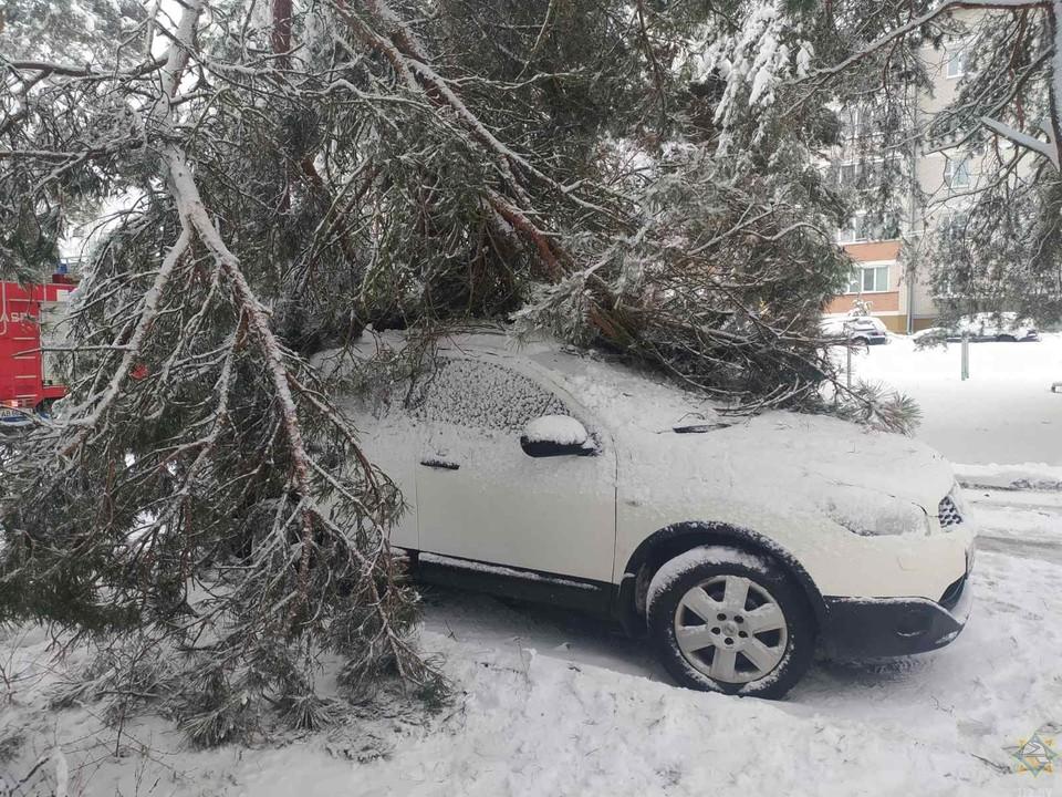 """Последствия циклона """"Ларс"""" в Беларуси: падали деревья, застревали в снегу машины. Фото: МЧС"""