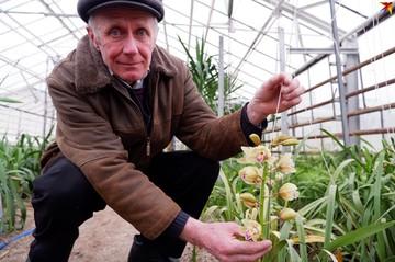 «Это была мечта моей жизни! В теплице уже сто кустов»: в поселке под Гомелем 71-летний пенсионер выращивает орхидеи