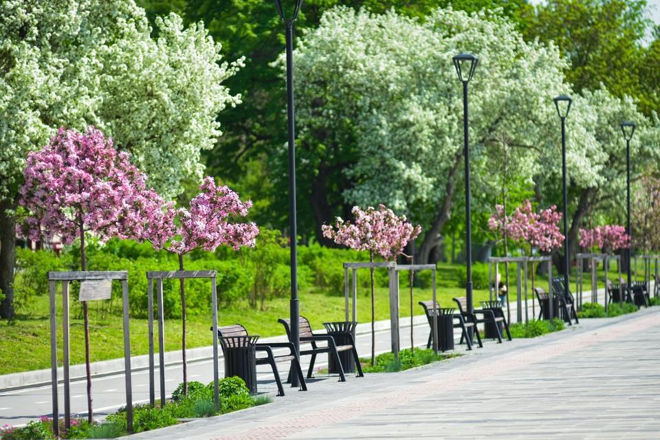 В Новосибирске создали специальный совет, который будет заниматься «зелеными» зонами города.