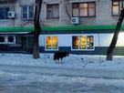 Стаи бродячих собак рыскают по окрестностям Хабаровска