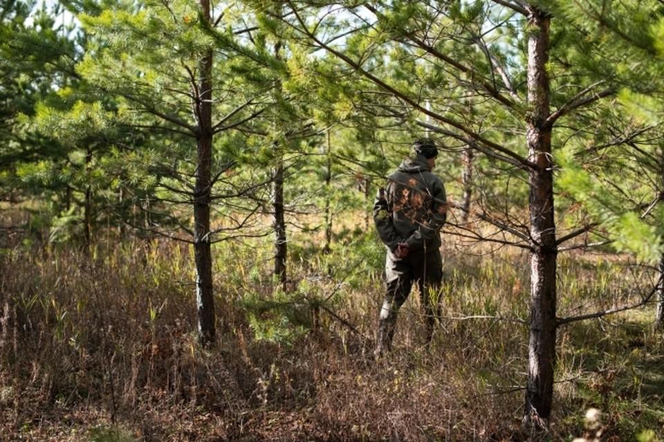Охотиться можно там можно не только на дичь, но и на крупных животных.