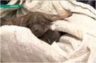 «Мать обнимала их до последнего»: слепых щенков умирающей собаки спасли из-под бетонной плиты
