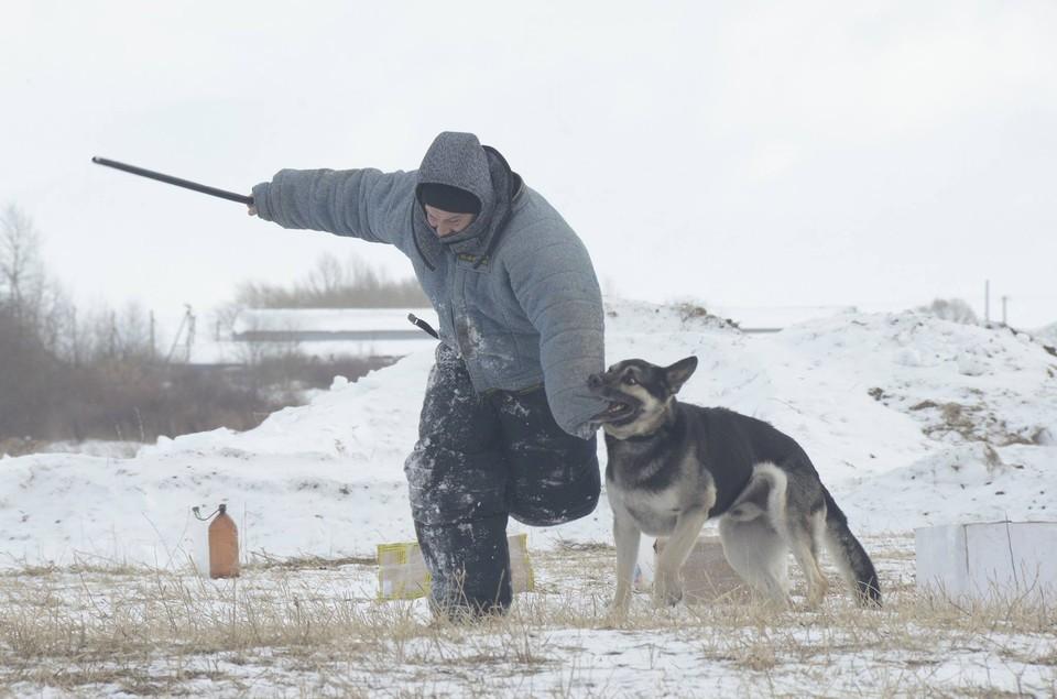 Для содержания животных подготовят все условия.
