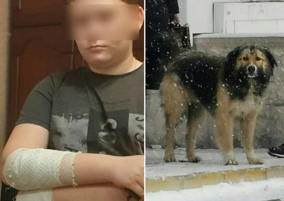 На Никиту напала вот эта собака, которая, на первый взгляд, выглядит безобидной.