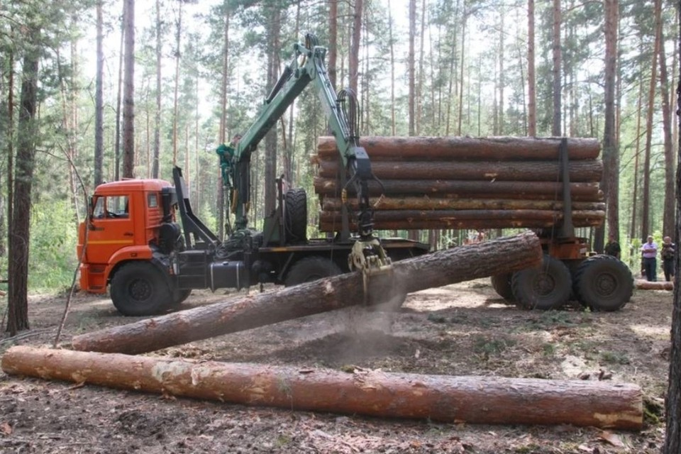 «Алтай-Форест» арендует лес в Тальменском районе для заготовки древесины.