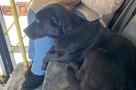 Собака 12 часов каталась на автобусе в Новосибирске в поисках хозяина: ее не стали выгонять