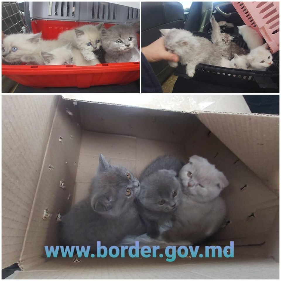 "Котята-""нелегалы"" были конфискованы (Фото: border.gov.md)."