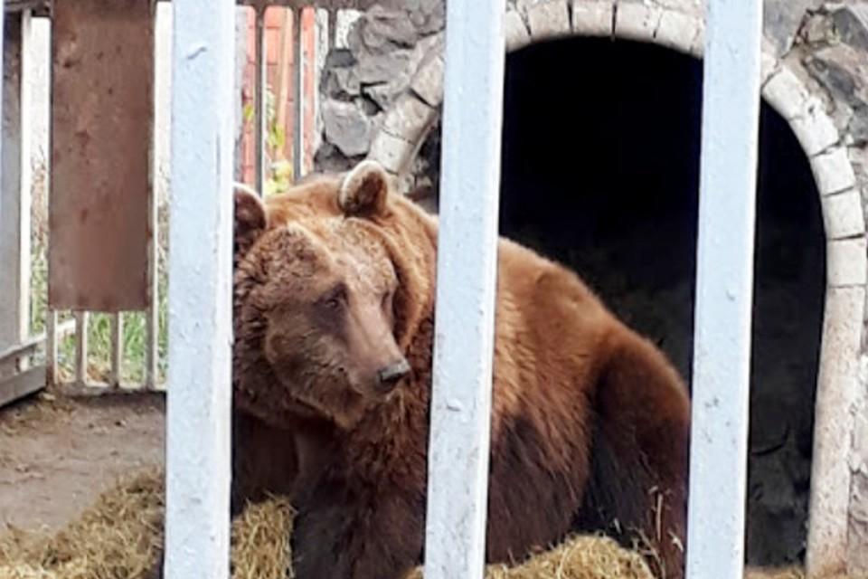 Медведица спряталась с малышами в оборудованной для нее берлоге и никого к себе не подпускает. Фото: facebook.com/zooparkmariupol