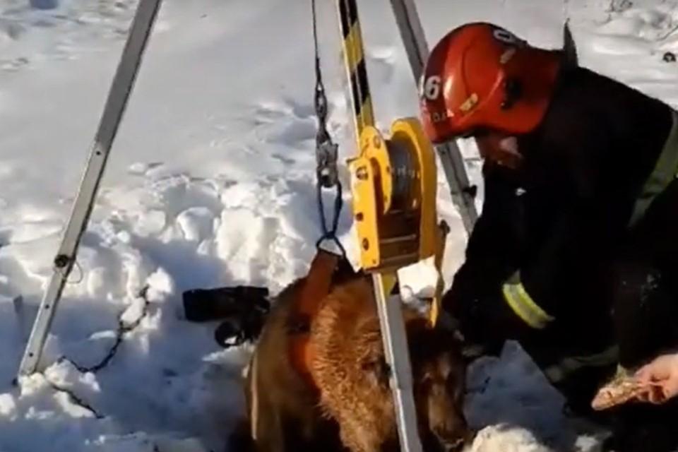 Спасатели достали из люка собаку. Фото: скриншот видео МЧС