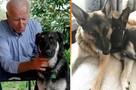 Немецкую овчарку Джо Байдена признали недостойной президента США