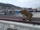 Уютный поселок с ленивыми котами и мировой историей: почему ехать в Балаклаву нужно именно сейчас